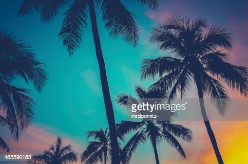 Hawaii Palm Trees At Sunset : Stock Photo