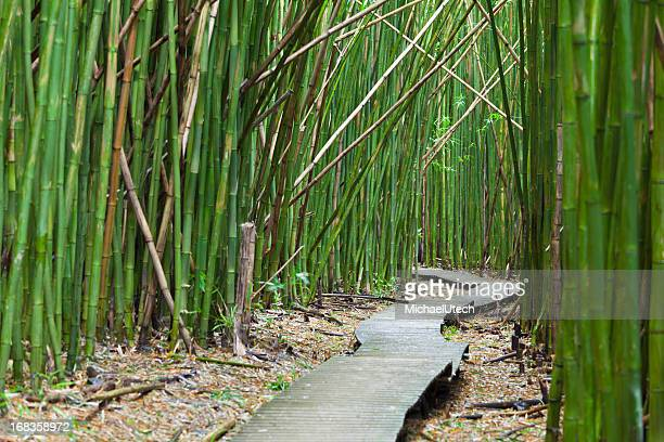Hawaiian Bamboo Forest, Maui