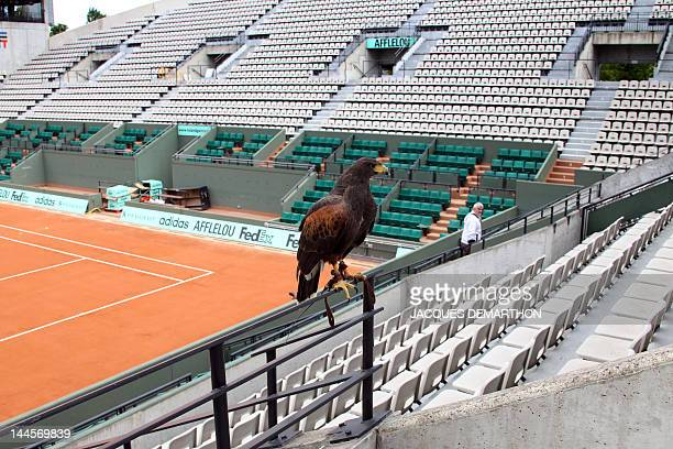 A hawker and his Harris hawk Tara used to scare pigeons with eight other hawks keep watch on the Suzanne Lenglen court at the RolandGarros tennis...