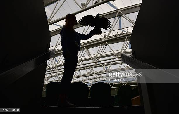 Hawker Imogen Davis poses for a photograph with Rufus the Harris Hawk used to scare away pigeons on Centre Court on day three of the 2015 Wimbledon...