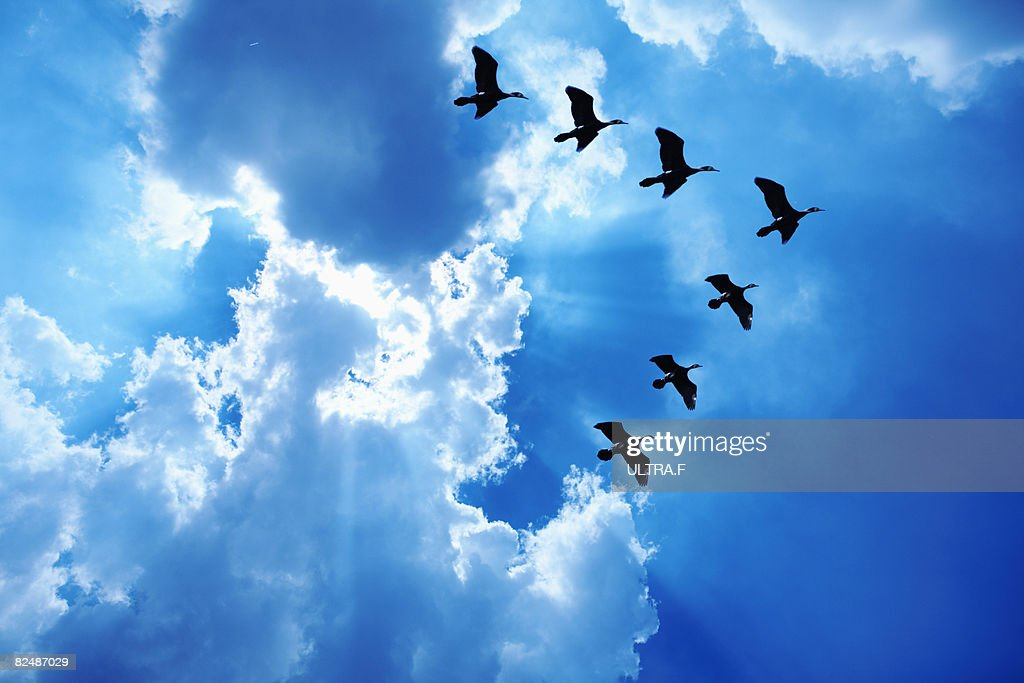 Hawks are flying in the sky.  : Stock Photo