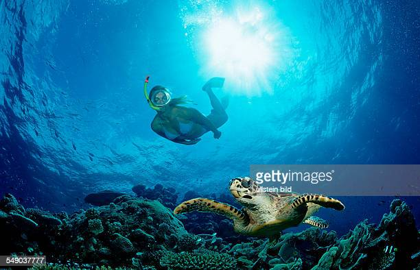 Hawksbill Turtle and Skin Diver Eretmochelys imbricata Maldives Indian Ocean Meemu Atoll