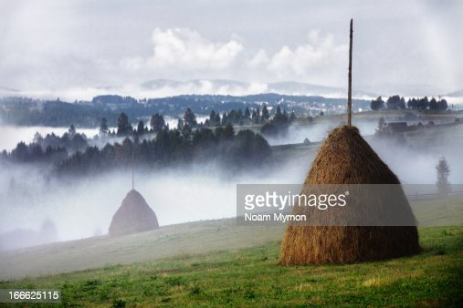 Hay and mist : Stock Photo