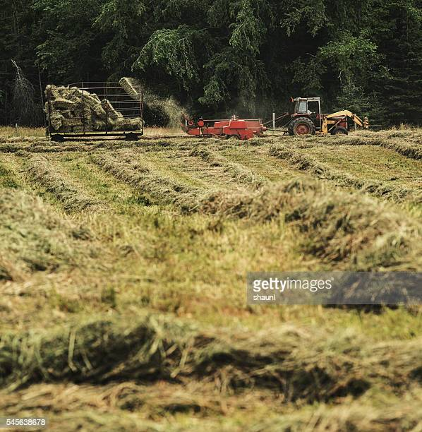 Hay Bale Collection