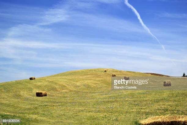 Hay bale in the field in spring in Cadiz