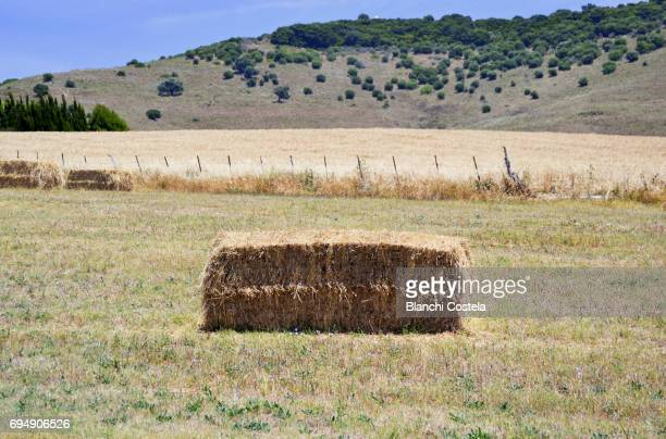 Hay bale in the field in spring