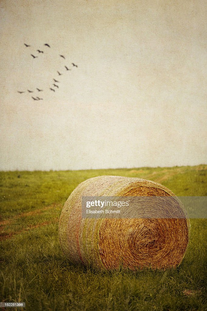 Hay bale on meadow : Stock Photo
