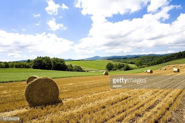 Hay Bale paisaje