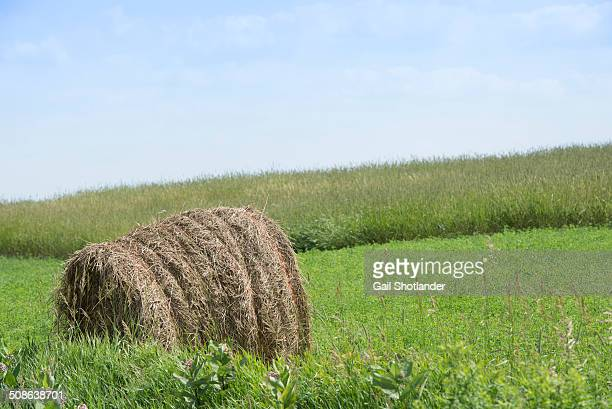 Hay Bale tied with Twine