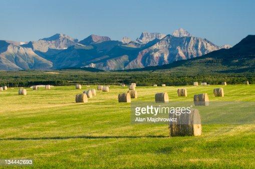 Hay bales, Alberta Canada : Stock Photo