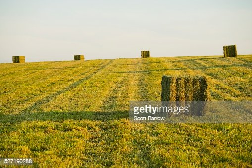 Hay bales in a field : Stock-Foto