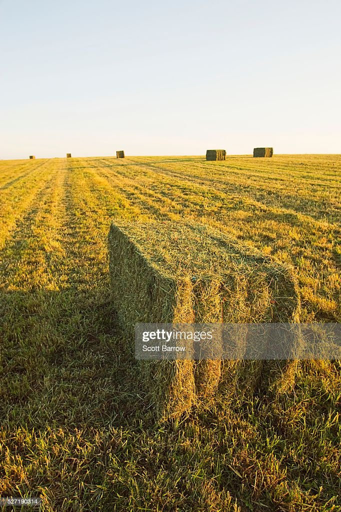 Hay bales in a field : Stockfoto