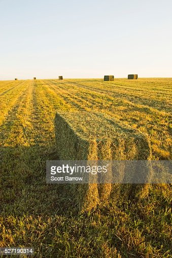 Hay bales in a field : Stock Photo