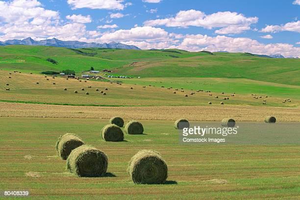 Hay bales in field near Highway 22. Alberta Foothills, Canada