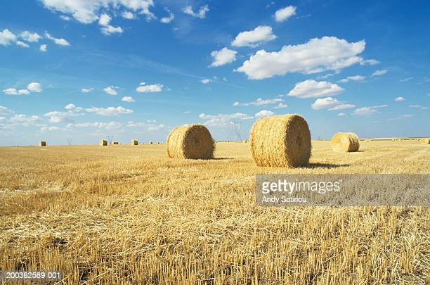 Hay bales in harvested wheat field, La Mancha, Spain
