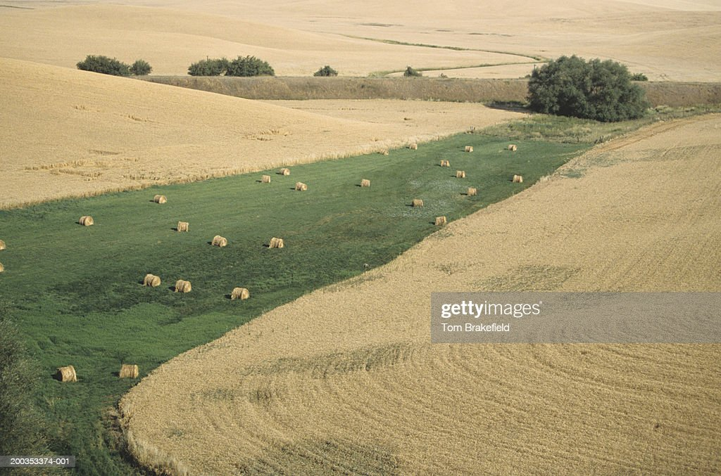 Hay bales in hay fields, late Summer, Washington State, USA, (High angle view) : Stock Photo