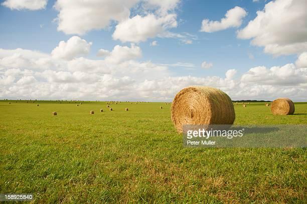 Hay bales in rural crop field