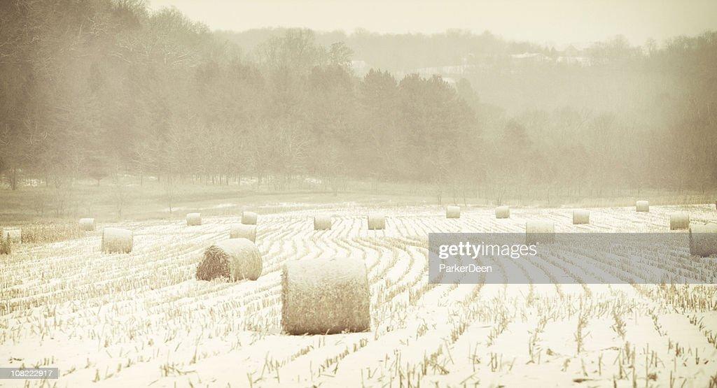 Hay Bales in Snowstorm : Stock Photo