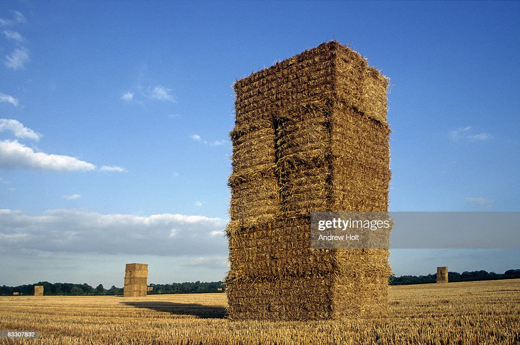 hay bales on a wheat field