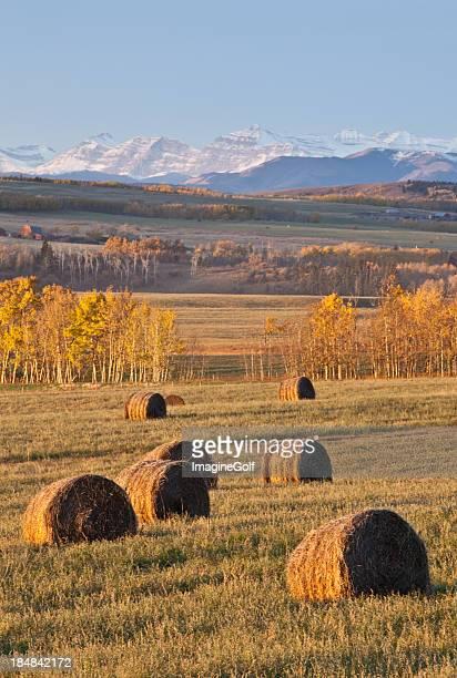 Hay Bales on the Prairie in Fall