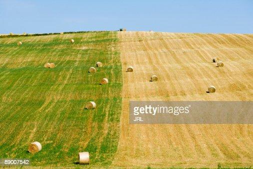 Hay field : Stock Photo