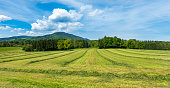 Hay on meadow in early summer.