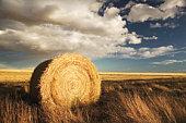 Hay roll, in field, autumn