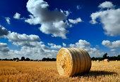 Hay rolls under  clouded blue sky