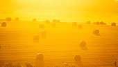 The setting sun illuminates this field of hay bales. The low angle and hazy atmosphere causes the scene to glow.