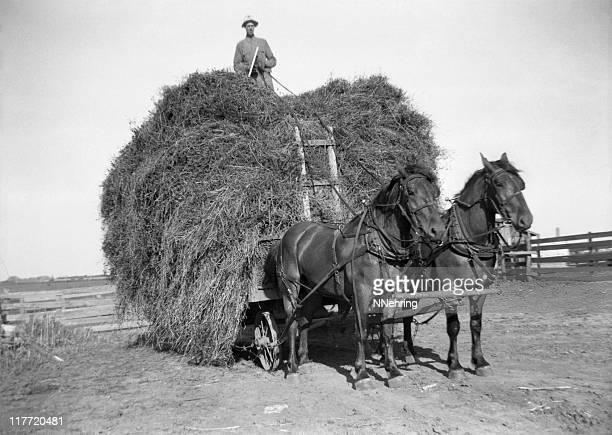 Chariot de foin avec le fermier et les chevaux de trait de 1941, rétro sur
