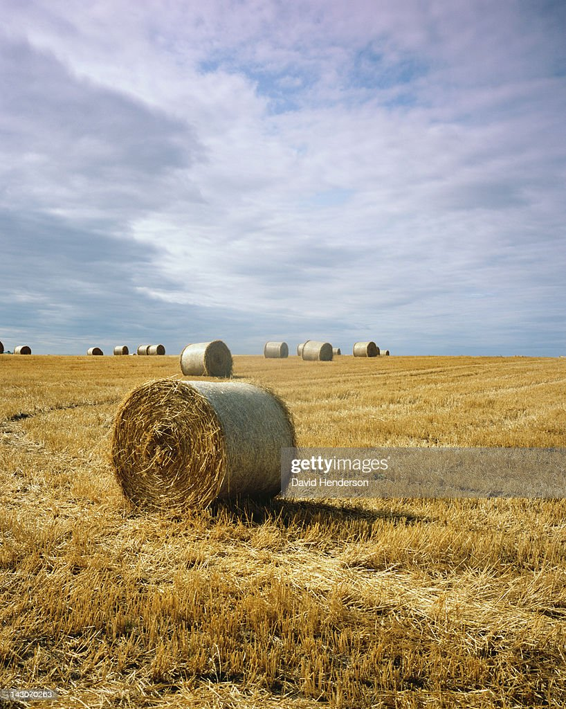 Haybales in field : Stock Photo