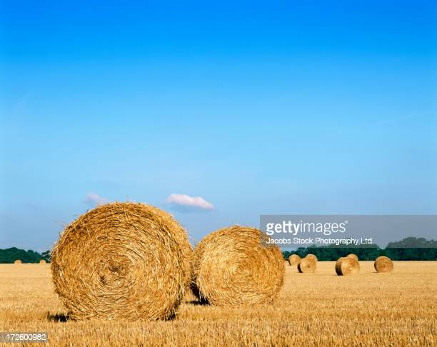 Haybales in rural crop field