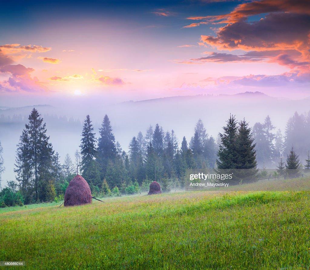 Haymaking in a foggy Carpathian village : Stock Photo