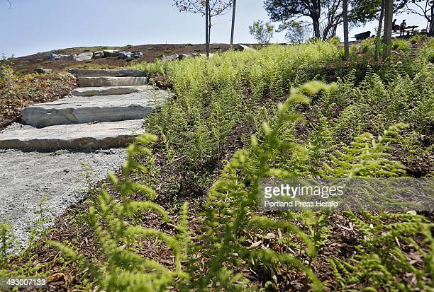 Hayscented ferns border a stone pathway as work continues at the arboretum at Fort Williams Park Photographed on Wednesday June 20 2012