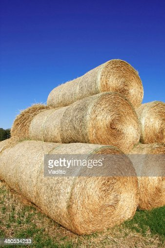 Haystack on the meadow : Stock Photo