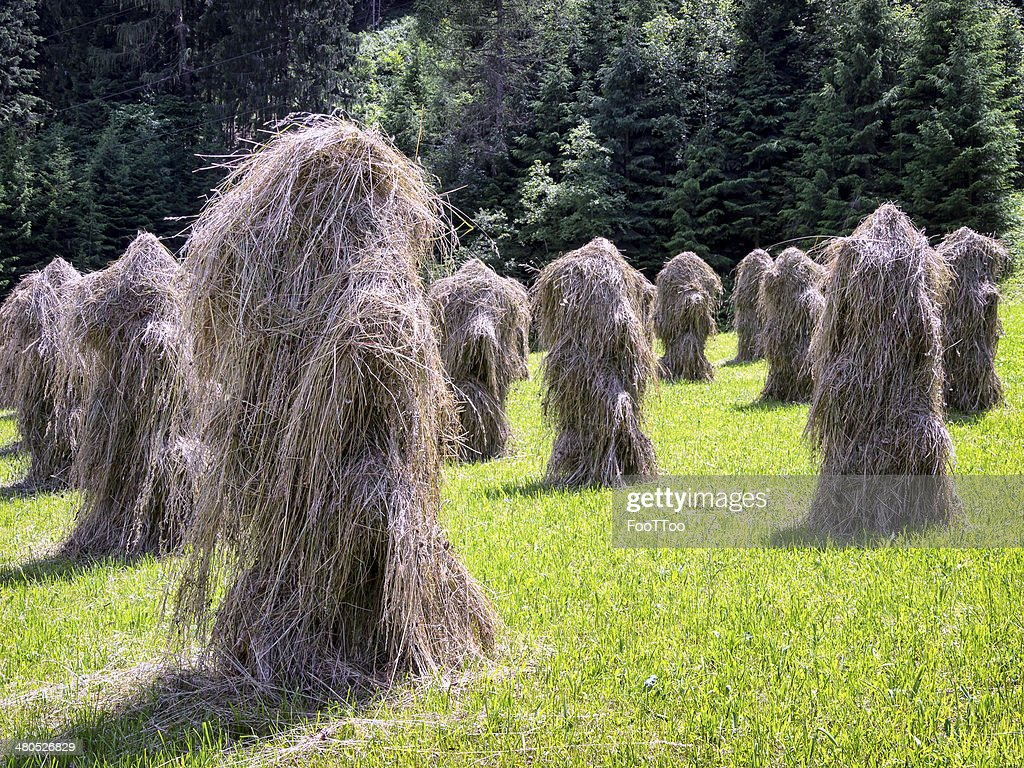 haystack : Stock Photo