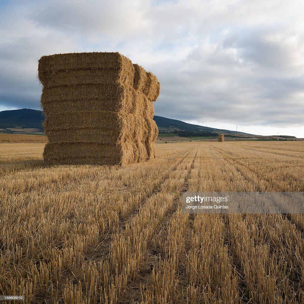 haystacks : Stock Photo