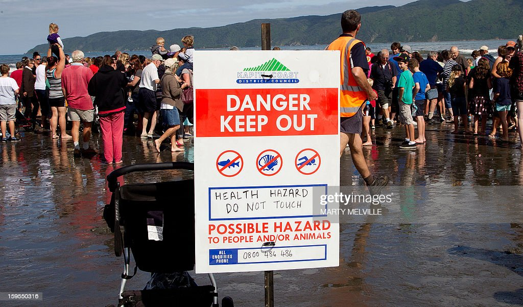 A hazard sign is displayed as people gather to see the dead body of a 15 metre sperm whale (not pictured) on a Paraparaumu beach on the Kapiti Coast on January 16, 2013. Hundreds of people gathered to see the whale which was washed up on the beach overnight after it died. AFP PHOTO / MARTY MELVILLE