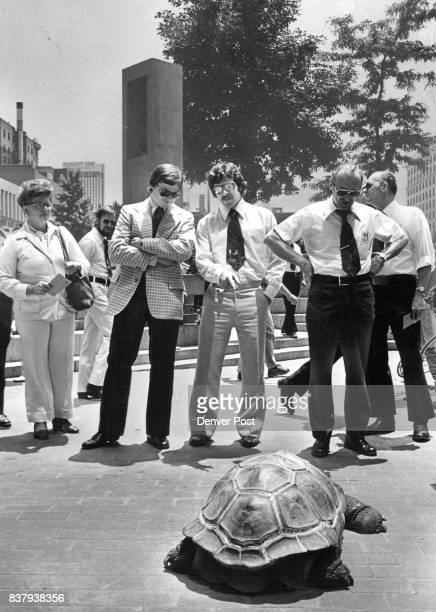He Doesn't Seem to Be Going anywhere But Neither is the Crowd A giant turtle attracts the curious stares of lunch hour businessmen and women Thursday...