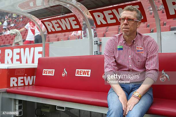 Head coach Peter Stoeger of Koeln looks on prior to the Bundesliga match between 1 FC Koelan and VfL Wolfsburg at RheinEnergieStadion on May 23 2015...