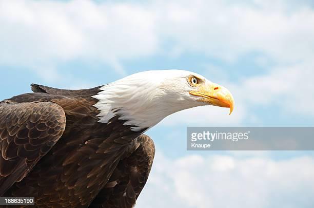 Head of bald eagle against sky