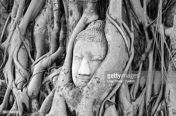 Head Of Buddha Statue Entwined In Tree Roots