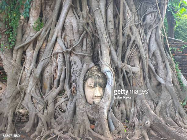 Head of Buddha statue in the tree roots at Wat Mahathat temple in Ayutthaya Historical Park at Ayutthaya, Thailand