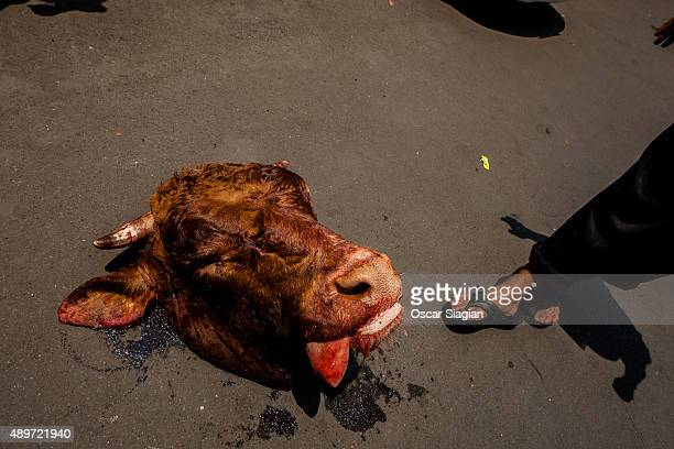Head of cow after slaughter is seen during celebrations of Eid alAdha at Sunda Kelapa Mosque on September 24 2015 in Jakarta Indonesia Muslims...