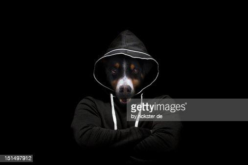 Head of dog : ストックフォト