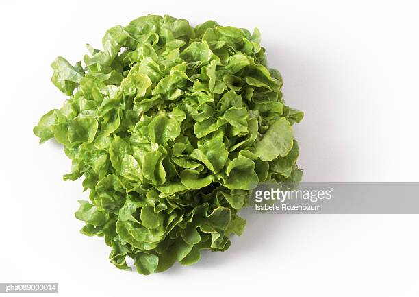 Head of green leaf lettuce, top view