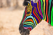Head of a zebra with multi colored lines instead of black and white