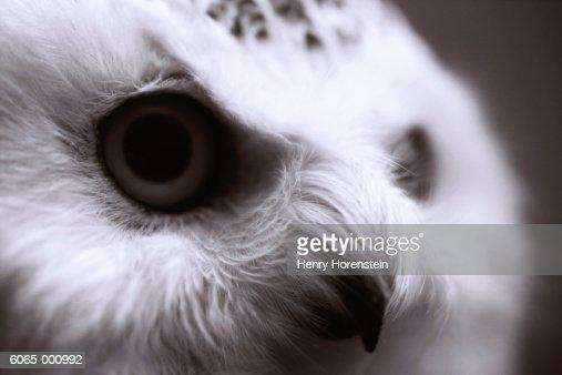 Head of Owl : Stock Photo