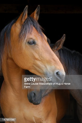 Head shot of horse and pony hugging on dark b/g : Stock Photo