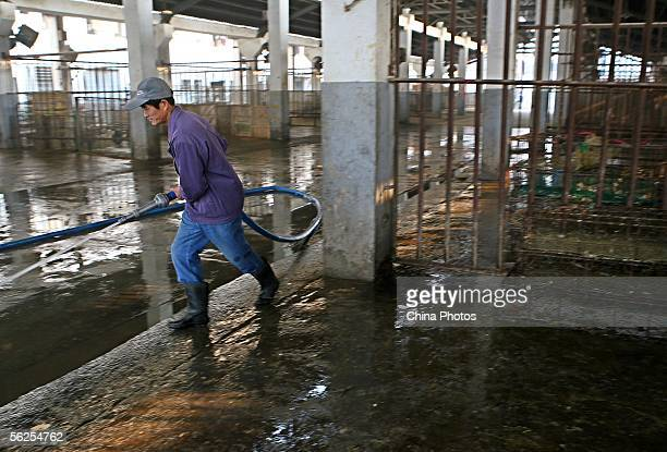 A health worker disinfects a chicken wholesale market on November 22 2005 in Shanghai China China issued strict new rules on reporting animal...